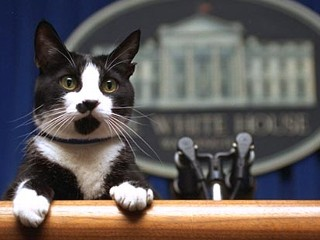 First Cat Socks at the White House