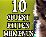 10 cutest kitten moments with Marmalade and Cole