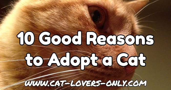 Jazzy the cat's profile with text overlay 10 good reasons to adopt a cat