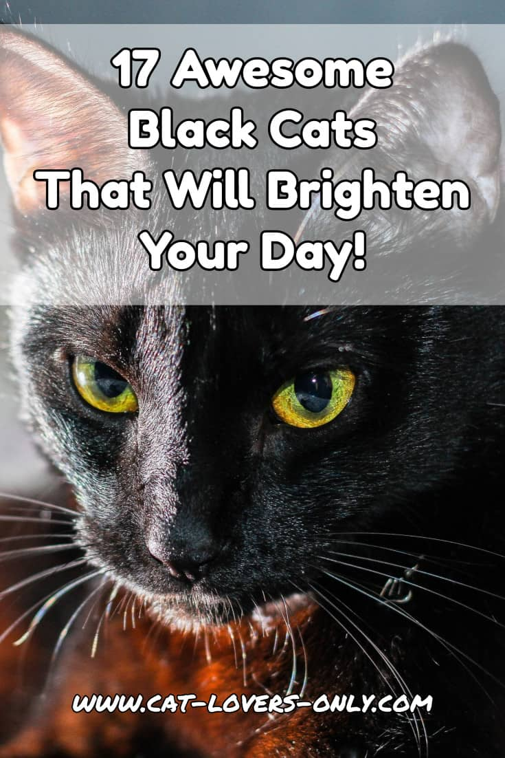 17 Awesome Black Cats That Will Brighten Your Day!