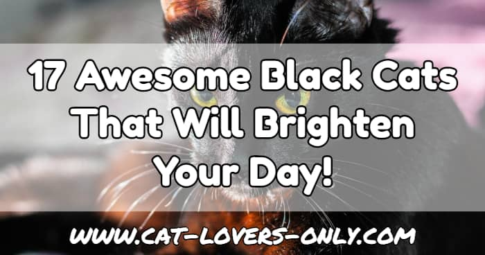 Black cat face with text overlay 17 Awesome Black Cats That Will Brighten Your Day!