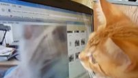 Orange kitten stalks himself on video