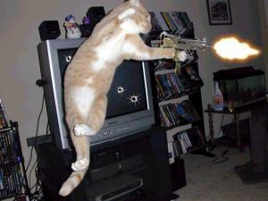 Funny picture of cat firing gun
