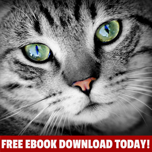 The Cat Rescue Diaries Book 2