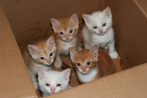 Kittens in a box