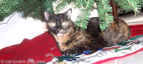 Teddie cat under the Christmas tree
