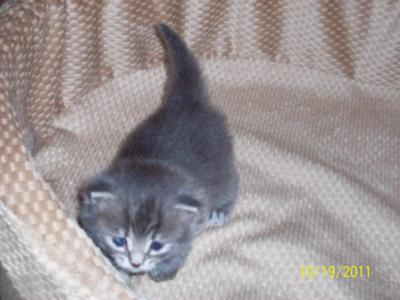 6 Week Old Kitten Won T Use Litter Box