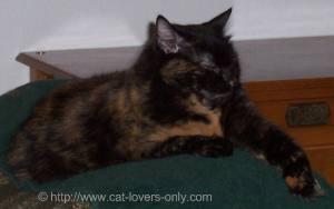 Frankie Cat sleeping on chair