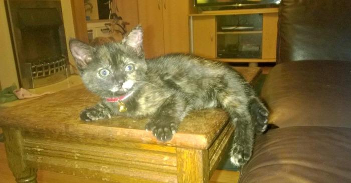 New kitten in the house