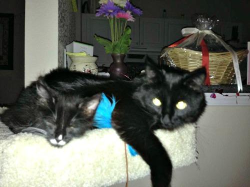 Spencer and Salem