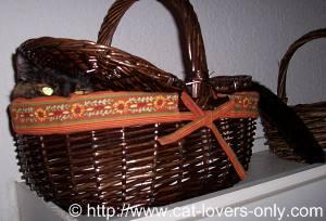 Teddie Cat in picnic basket