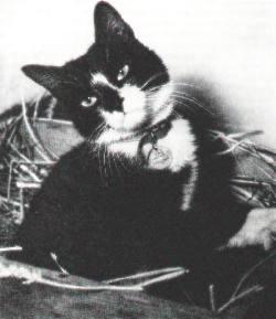 Able Seacat Simon of HMS Amethyst