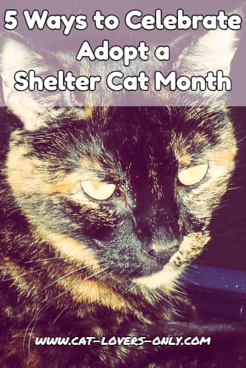 5 Ways to Celebrate Adopt a Shelter Cat Month