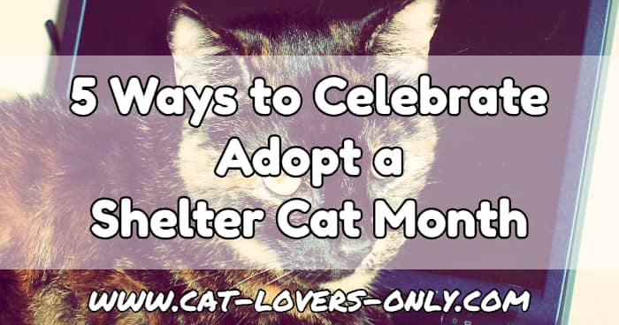 Teddie cat's face with text 5 Ways to Celebrate Adopt a Shelter Cat Month