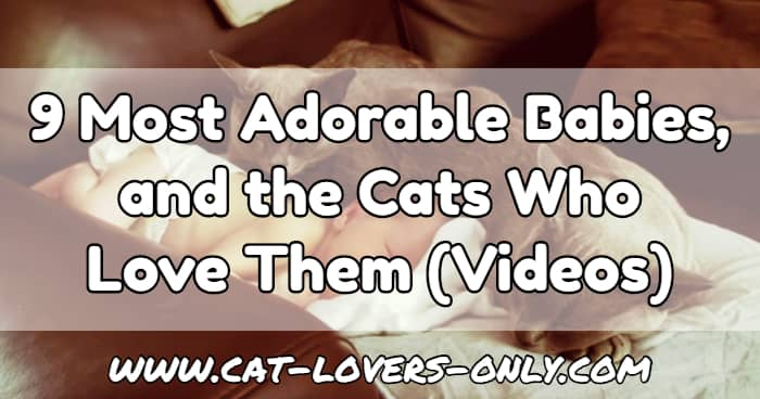 Baby and cats with text overlay 9 Most Adorable Babies and the Cats Who Love Them (Videos)
