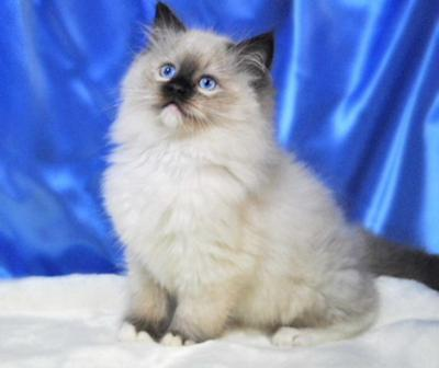 Winston a seal mitted Boy