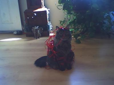 Who messed up the ribbon?  Not me.