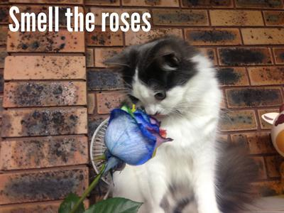 Smell the roses!