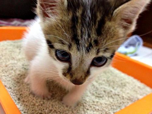 Angel the kitten