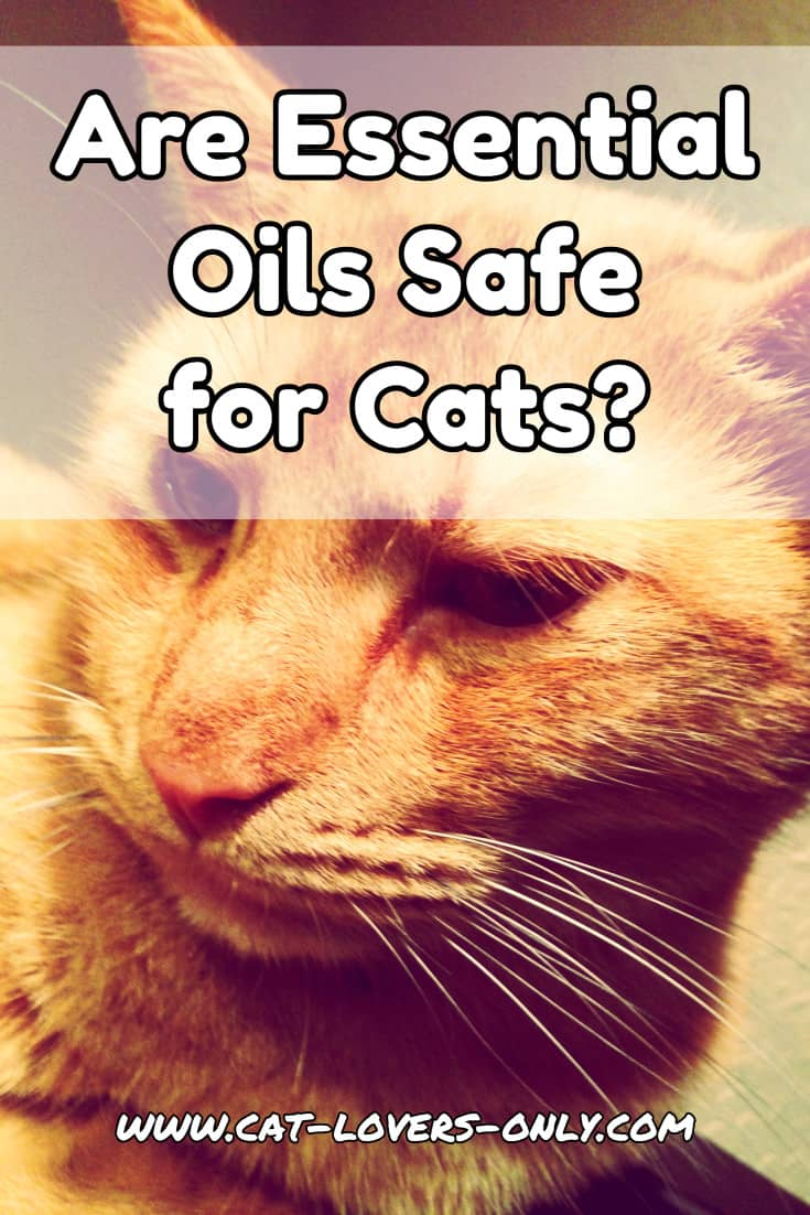 Jazzy the cat's face with text overlay Are Essential Oils Safe for Cats?