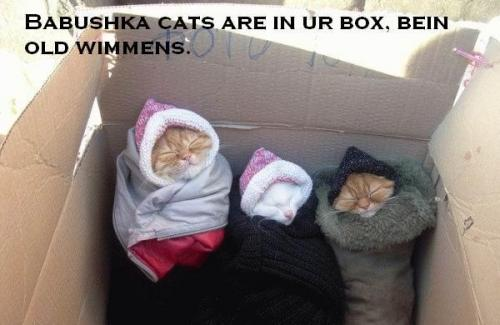 Babushka cats are in ur box