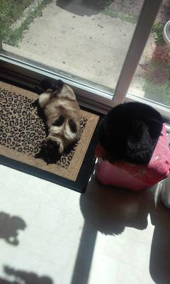 Bear & Lola 🌞 sunning by the sliding doors☺