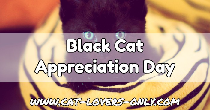 Black kitten with text Black Cat Appreciation Day
