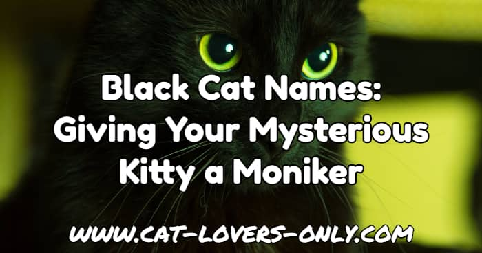 Black Cats In Movies Names