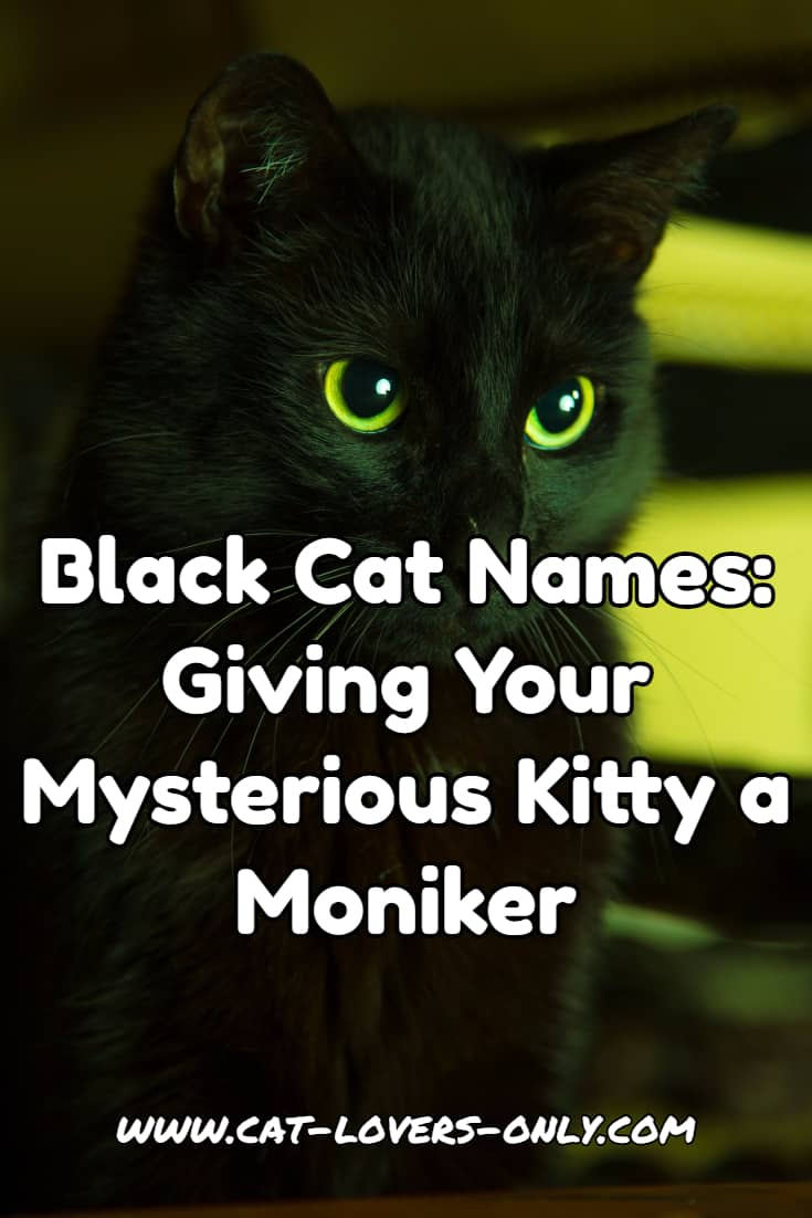 Black cat with text caption - Black Cat Names - Giving Your Mysterious Kitty a Moniker