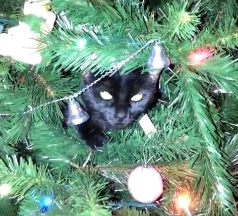Black kitty in Christmas tree