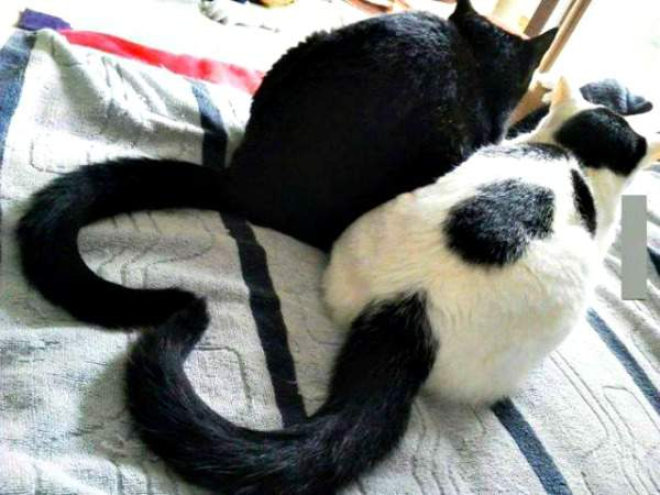 Blacky and Baggu