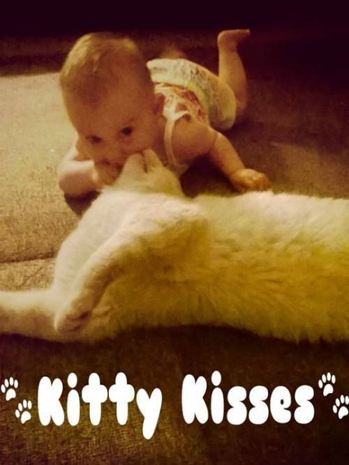 Bubby kitty and baby