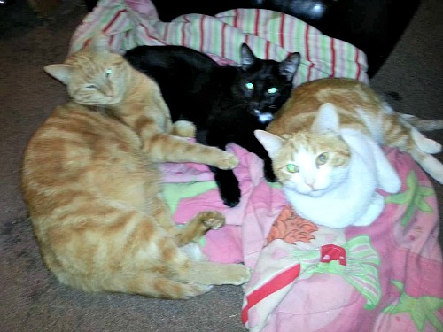 Butterscotch, Snoopy and Squeaky