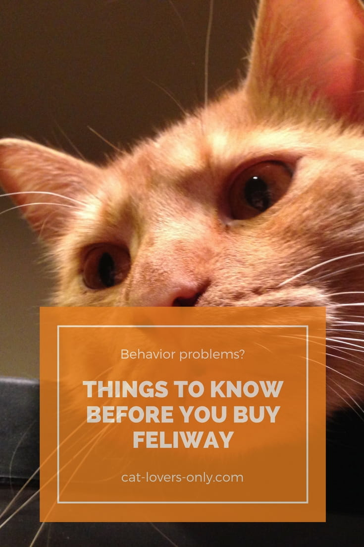 Jazzy the orange tabby with caption Before You Buy Feliway