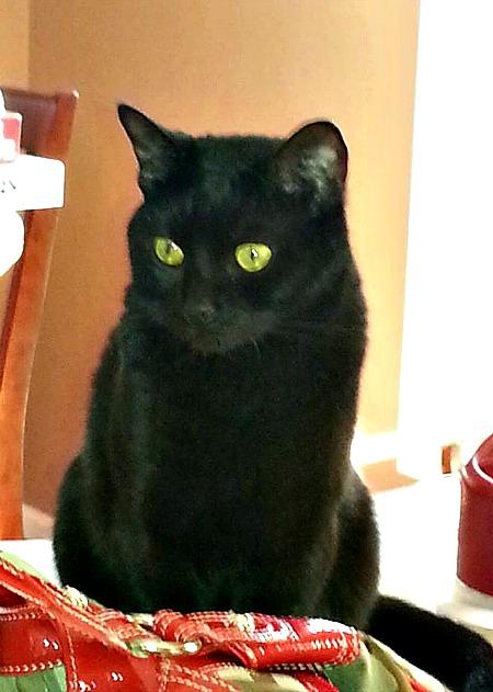 Caesar the black cat