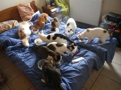 Greece Cat Rescue