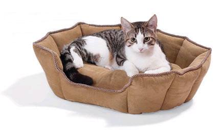 Caramel cat bed