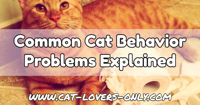 Jazzy the cat tears up the toilet paper with text overlay Common Cat Behavior Problems Explained