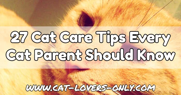 Jazzy the cat's face with text overlay 27 Cat Care Tips Every Cat Parent Should Know