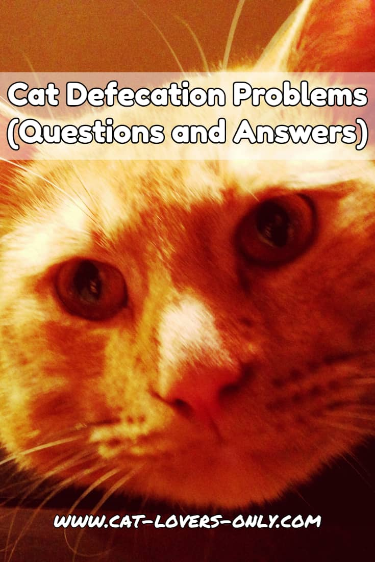 Jazzy cat's face with text overlay Cat Defecation Problems Questions and Answers