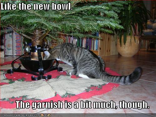 Cat drinks from christmas tree basin