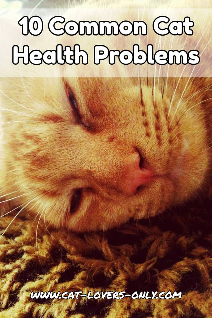 Jazzy the cat's face with text overlay 10 Common Cat Health Problems