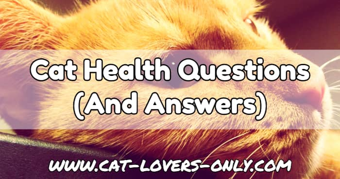 Jazzy the cat's face with text overlay Cat Health Questions and Answers