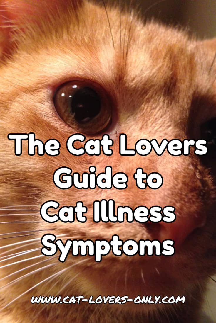 Jazzy the cat's face with text overlay The Cat Lovers Guide to Cat Illness Symptoms