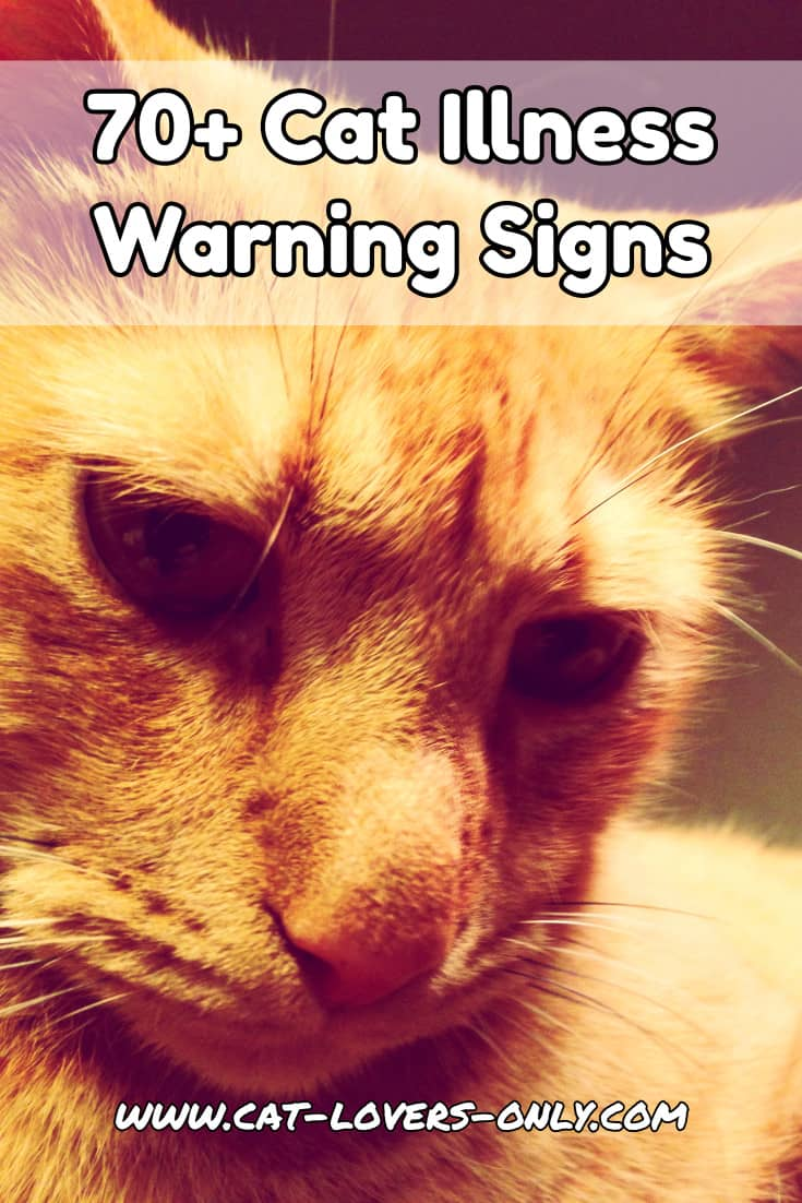 Jazzy the cat's face with text overlay 70+ Cat Illness Warning Signs