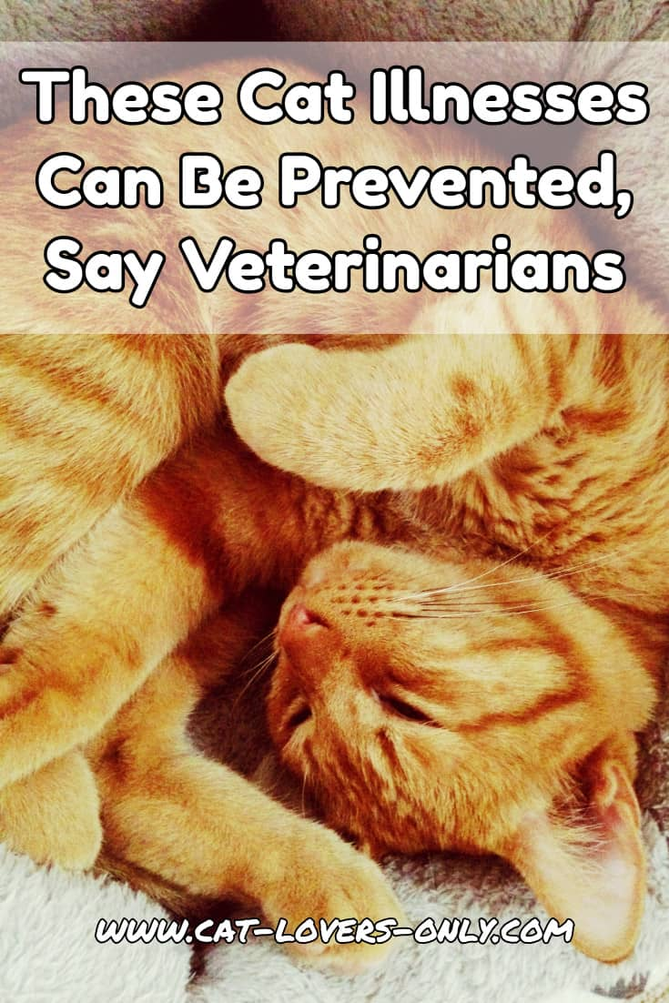 Jazzy the cat with text overlay These Cat Illnesses Can Be Prevented, Say Veterinarians