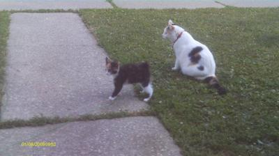 Teaching the young one we adopted to stay in the yard