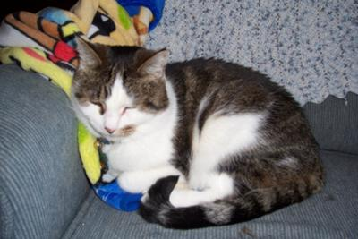 Orrie, Precious Kitty