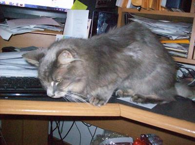 Salem always helped me work at my desk!