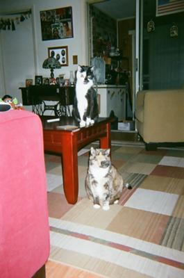 Ramone is the tuxedo & Gypsy is the calico.